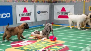 Puppies playing football airs opposite the Super Bowl, a perfect example of tent-pole programming. Note the sponsor banners placed around the playing field, which creates more revenue for the program.
